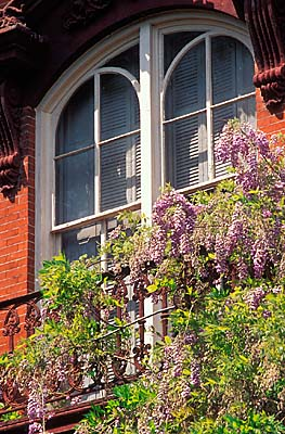 "Savannah Historic District; The Mercer House on Monterrey Square, scene of murder in ""Midnight in the Garden of Good and Evil""; wisteria frames an upper window, balcony. Location: GA: Chatham County. [ref. to #211.028]"